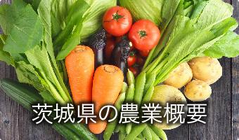 茨城県の農業概要