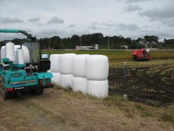 飼料稲等収穫調整事業