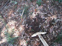 落花生の育て方 肥料 堆肥、腐葉土