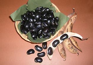 常陸大黒のさやと豆の写真