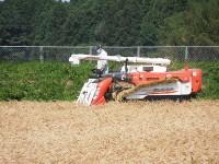 麦原種ほ場(収穫作業)