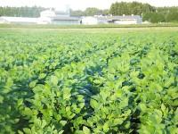 大豆原種ほ場と施設