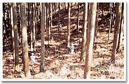 森林資源の調査状況