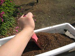落花生の育て方 土つくり